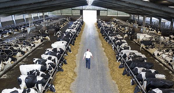 Innovación y tecnología en la ganadería irlandesa