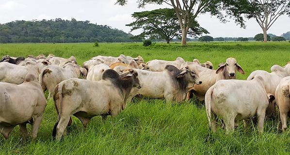 Pautas para Mejorar la Calidad de la Carne