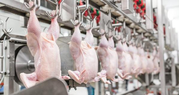 La producción nacional de carne de pollo es suficiente para solventar la demanda local