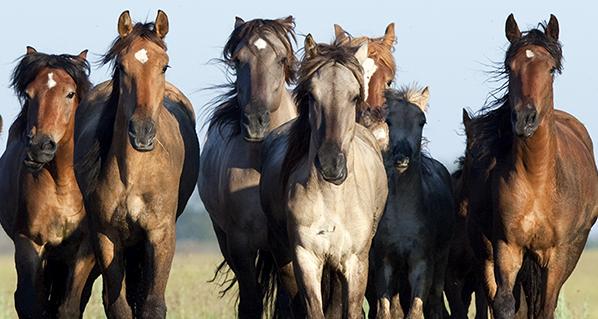 Cuidado, bienestar y salud de los equinos en esta pandemia