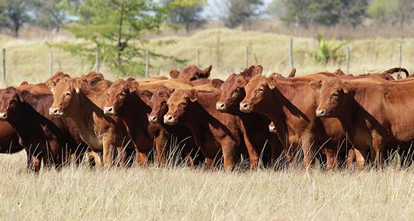 El papel clave de la ganadería durante la pandemia de COVID-19