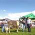 Agrovet Market en Expo Ternera Jorge Basadre Quispicanchis-Cusco