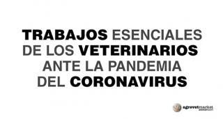 ¿Por qué la profesión veterinaria es imprescindible para la sociedad actual?