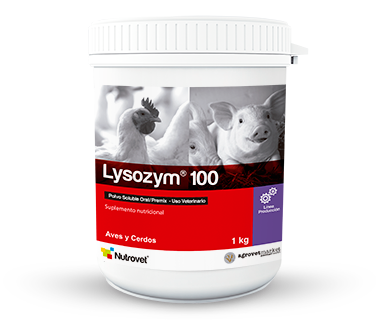 Lysozym® 100