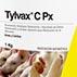 Evaluación de la eficacia in vivo de Tylvax® C Px contra cepas de campo de Mycoplasma gallisepticum en pavos.