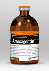 Amoxigentin® T
