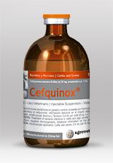 Cefquinox®